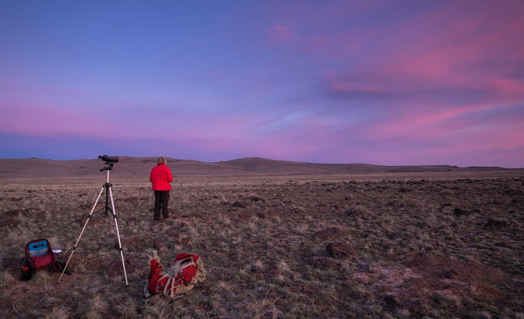 Studying the sage grouse at sunrise in Oregon