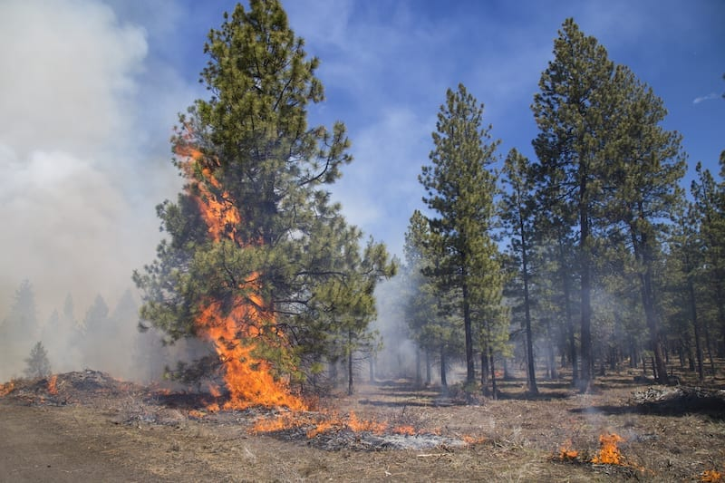A prescribed burn, part of the Deschutes Collaborative Forest Project initiative.
