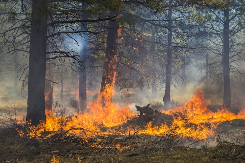A prescribed burn in Central Oregon from the Deschutes Collaborative Forest Project.