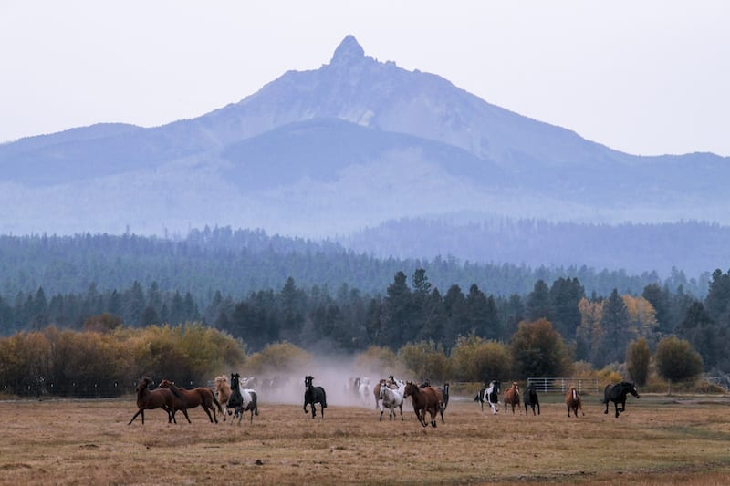 Horses at Black Butte Ranch in Sisters, Oregon.