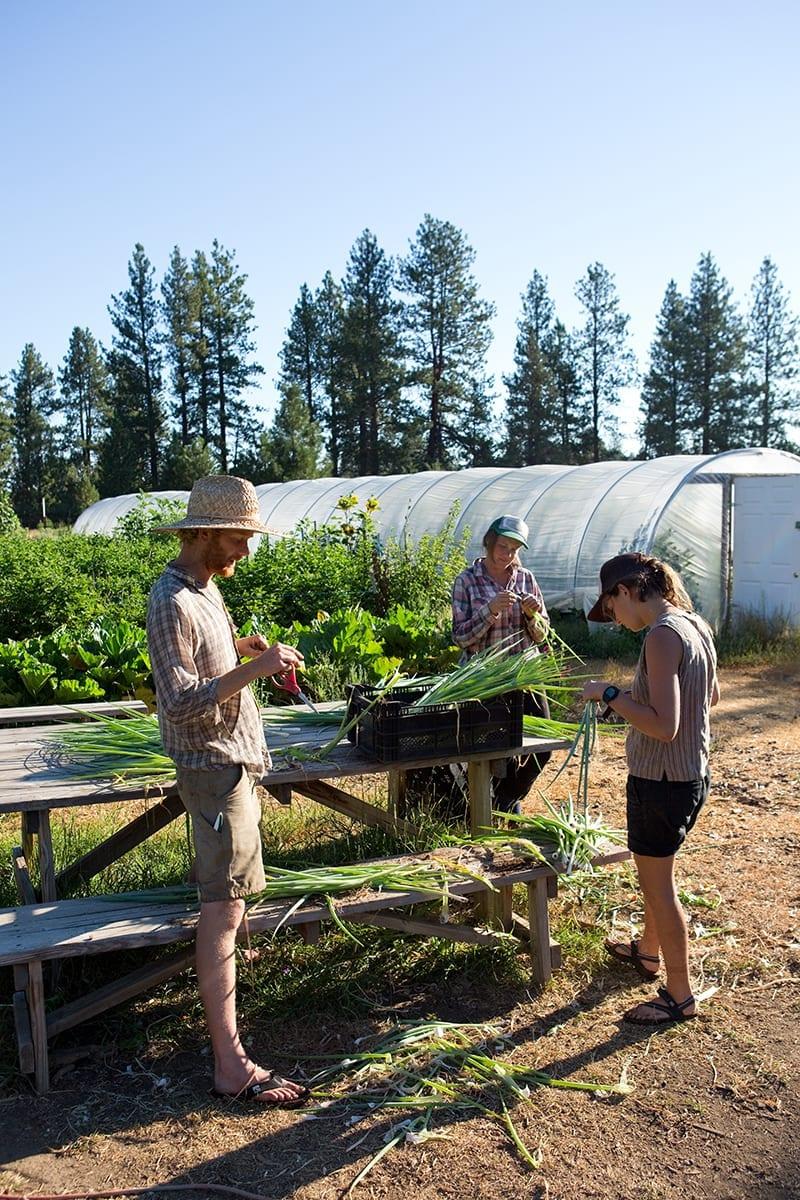 Mahonia Gardens farm in Sisters, Oregon