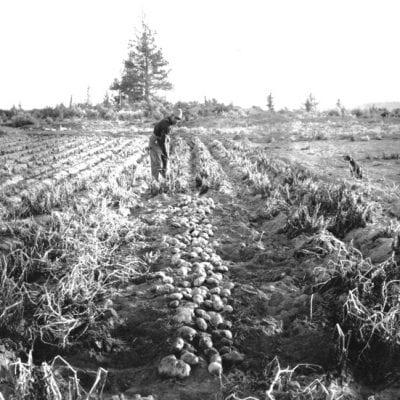 History of the Redmond Potato Show