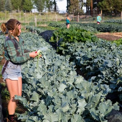 Seed to Table Cultivates Wellness Through Food Education in Schools