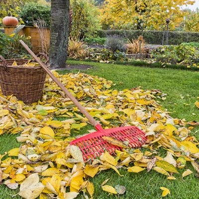 6 Ways to Prep Your Garden for Winter