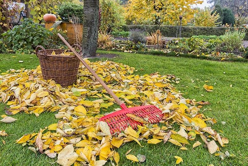Prepare Your Garden for the Winter