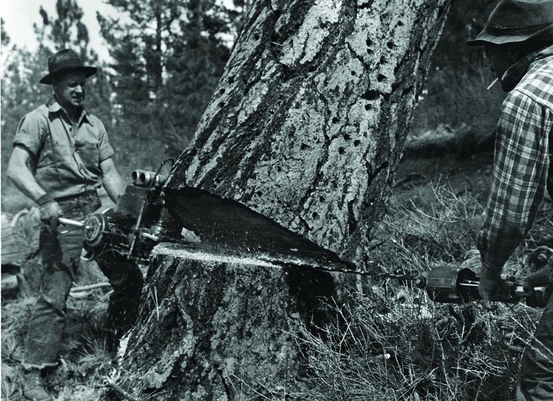 Photograph by Paul Hosmer of a timber-feller in Bend, Oregon