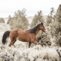 Equine Outreach Horse Rescue