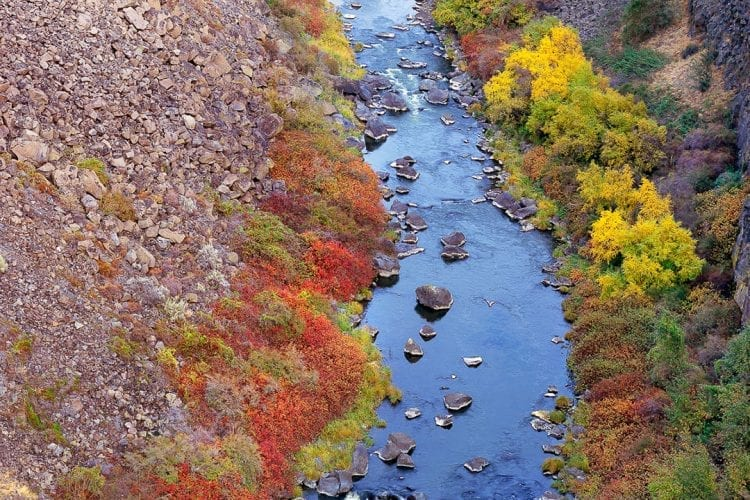 A Swimming Chance For Fish On The Crooked River
