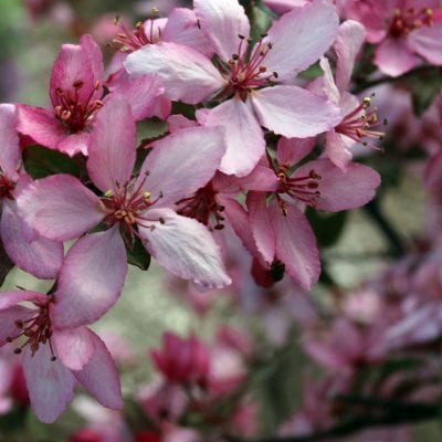 5 Drought-Resistant Plants for High Desert Landscaping