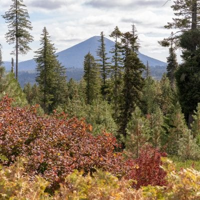 Where to Find Peak Fall in Central Oregon