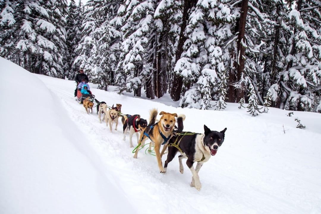 Go dog sledding this winter near Bend, Oregon