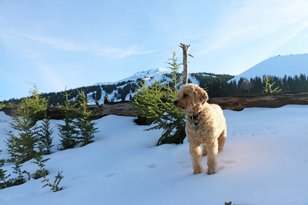 cross country skiing with dogs bend oregon