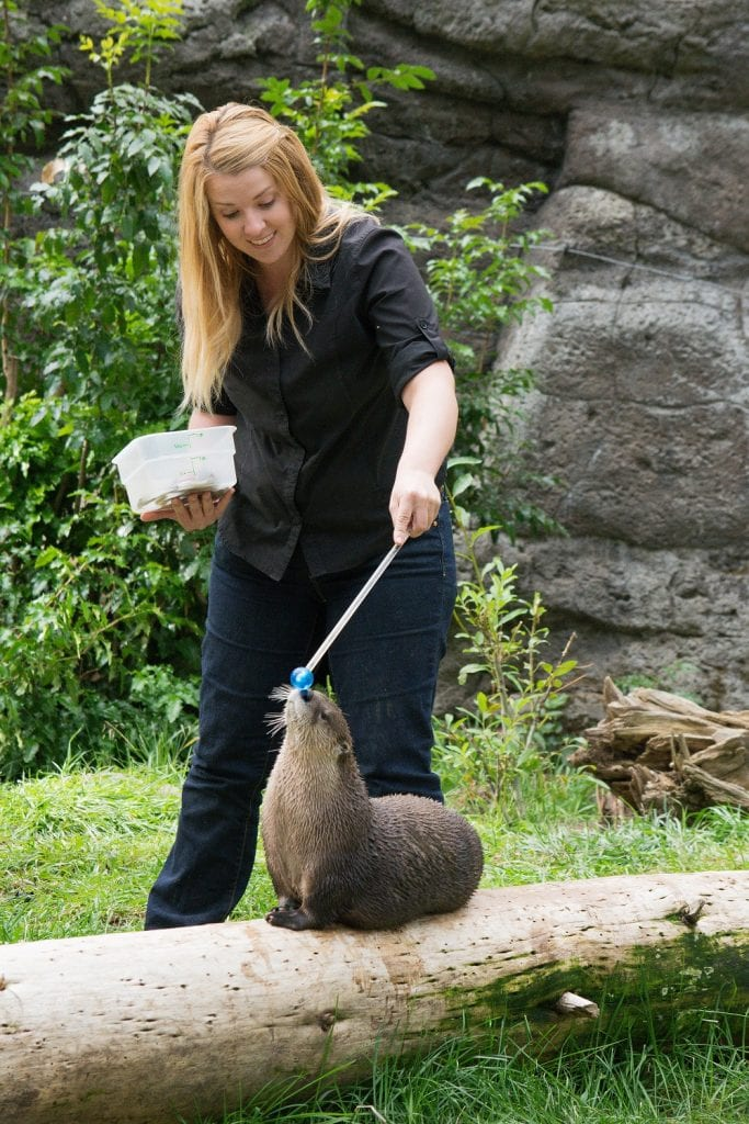 Alysia Wolf with an otter at the High Desert Museum in Bend, Oregon